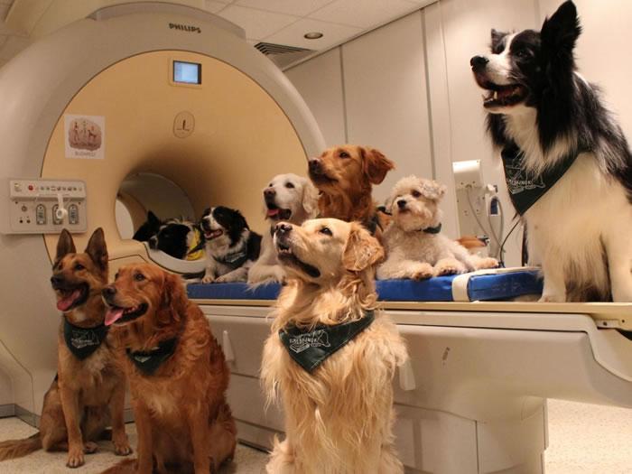 研究发现狗狗脑部处语言的方式跟人类相同