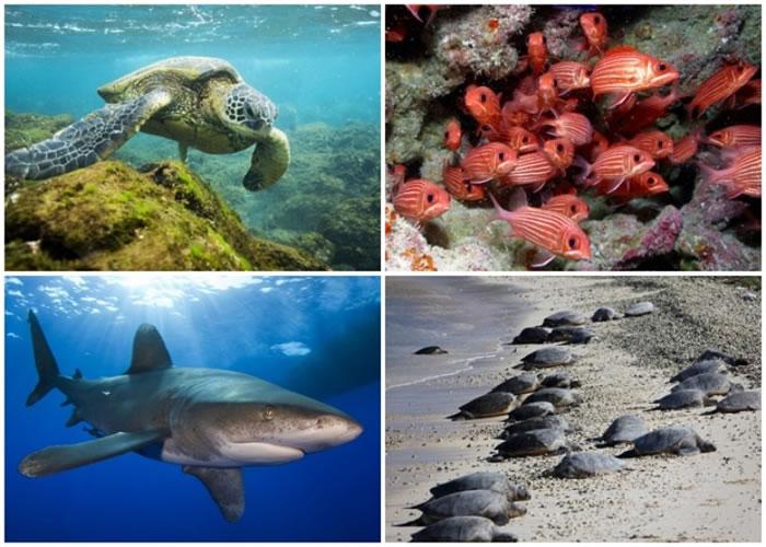 帕帕哈瑙莫夸基亚有多种海洋生物栖息。