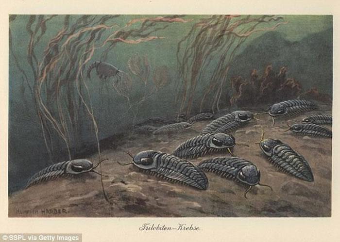 """在""""二叠纪-三叠纪灭绝事件""""之后,生命的复苏过程大约花费了500~900万年之久。在此次严重的灭绝事件中,地球上海洋生命的96%以及陆地生命的大约70%都消失了"""