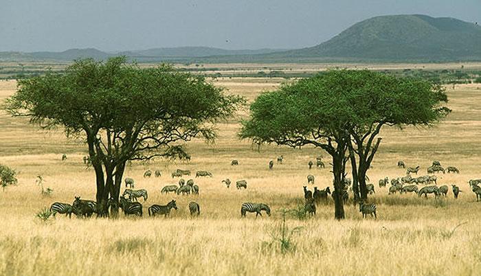 食草哺乳动物与非洲热带稀树草原的起源