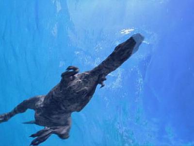 云南省恐龙山镇发现中国首例肉食恐龙和植食恐龙的游泳足迹化石
