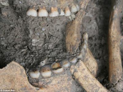 8600年前农产品已出现在巴尔干地区