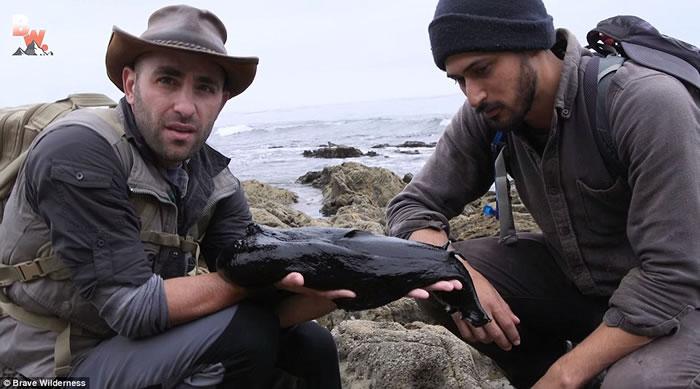 美国节目主持人到南加州海滩拍摄时发现巨如小狗的超大鼻涕虫