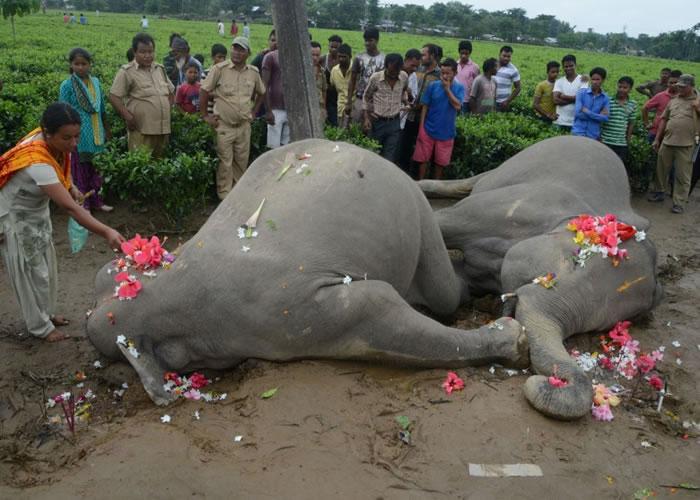 民众以鲜花哀悼死去的大象。