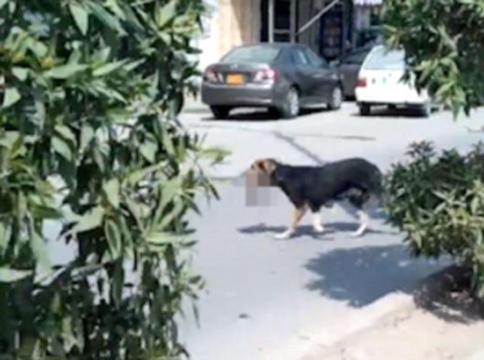 巴基斯坦出现骇人听闻一幕:狗在闹市街头叼着人类婴儿尸体