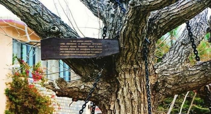 """巴基斯坦一棵榕树1898年遭铁炼缠绕囚禁至今 上面写着""""我被逮捕了"""""""