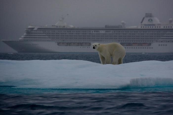 西北航道上有时可以看到野生北极熊。