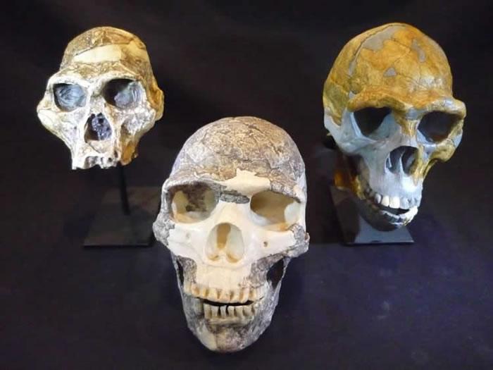 """人类大脑通过进化不仅变得更大 而且变得比先前认为的更加耗能和""""嗜血"""""""