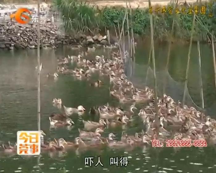 UFO出现在东莞农庄?千只动物集体惨叫。