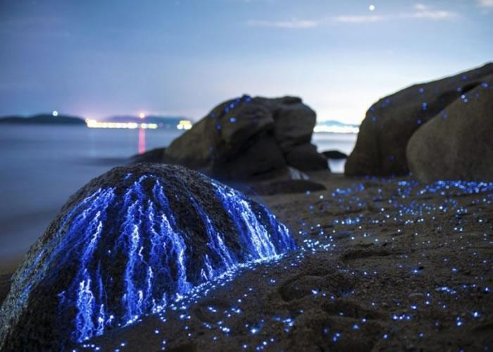 海萤如像石头所流出的眼泪。