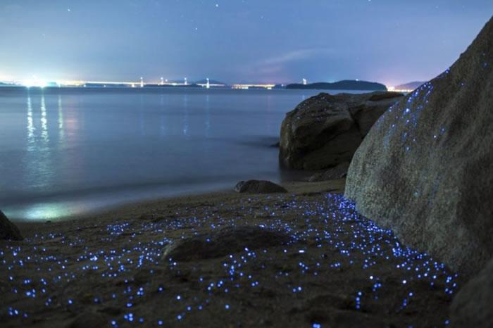 海萤遇水便会发光。