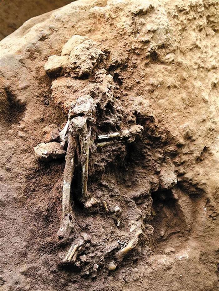 广东省英德市青塘镇黄门岩1号洞出土1万多年前的完整古人类化石