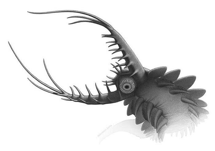 """格陵兰岛发现5.2亿年前长着12条腿的海洋生物化石""""Pambdelurion"""""""