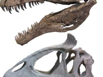 大型兽脚类恐龙的头上有骨质冠状物或突出物