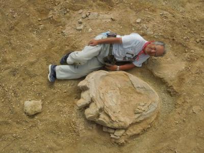 蒙古-日本联合考察队在蒙古国戈壁沙漠挖掘出106厘米长恐龙足迹化石