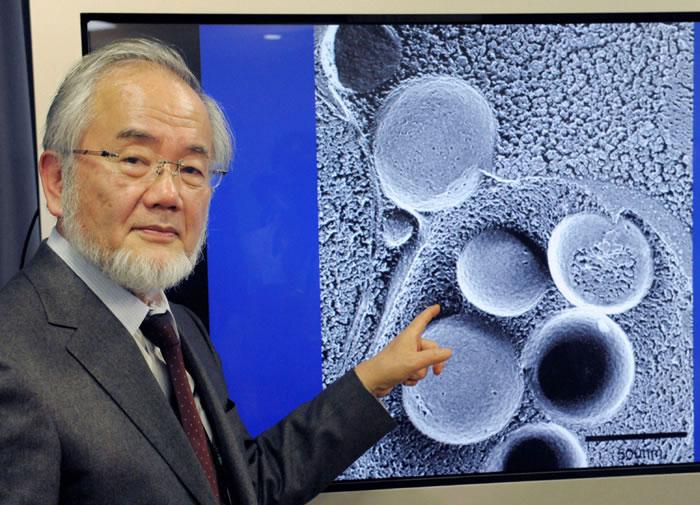 日本学者大隅良典研究细胞自噬作用获2016年诺贝尔医学及生理学奖
