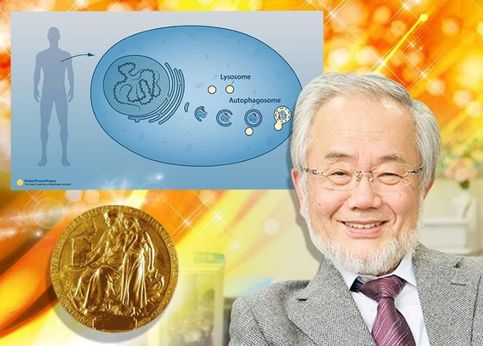大隅良典夺得医学奖。