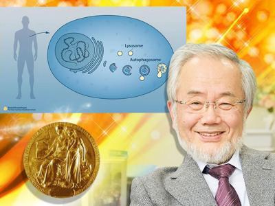 日本分子细胞生物学家大隅良典独得诺贝尔医学奖 细胞自噬机制先驱