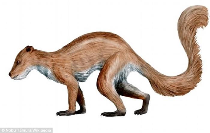 5600万年前大型陨星碰撞地球促使最早的灵长类动物进化形成