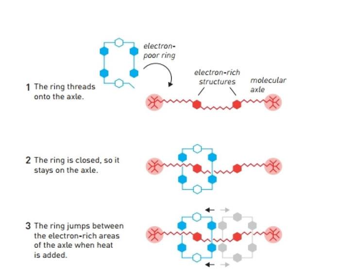 """斯托达特研究将环状分子套放到到分子轴上,并围绕分子轴运转的""""轮烷""""。"""