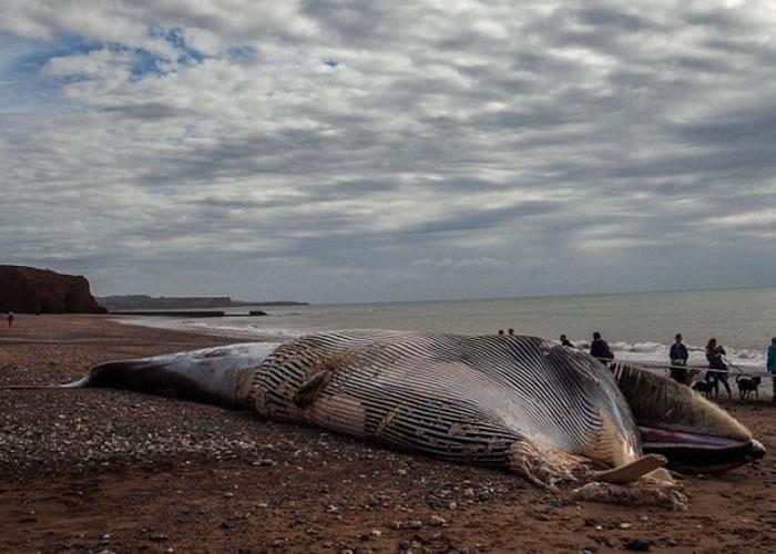 长须鲸搁浅沙滩。