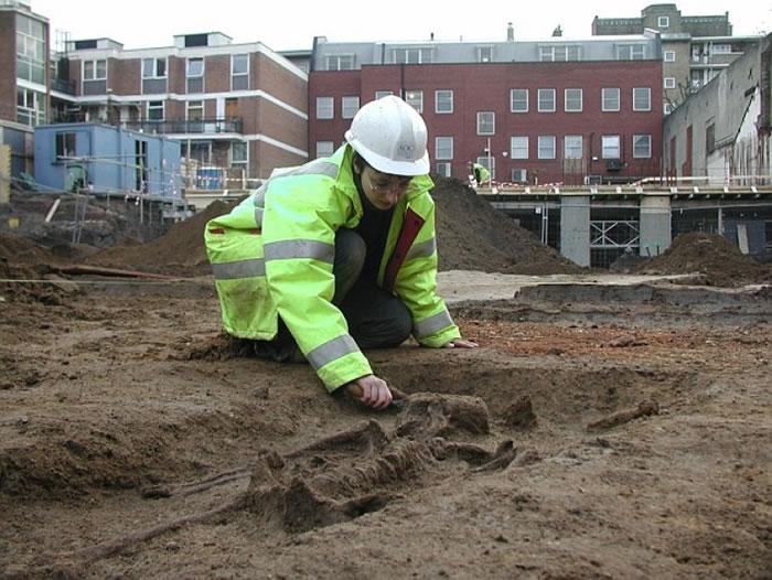 考古学家打扫骸骨。