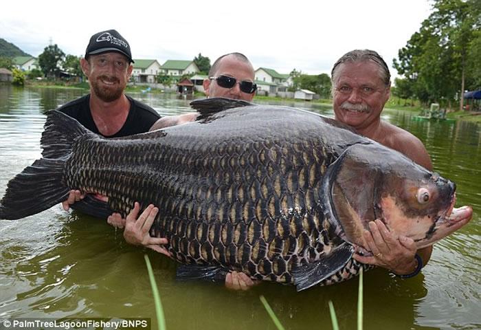 韦勃(右一)钓获巨型的暹罗鲤鱼。