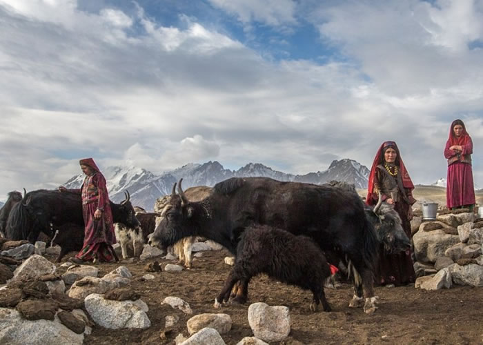 瓦罕人以养牦牛维生。