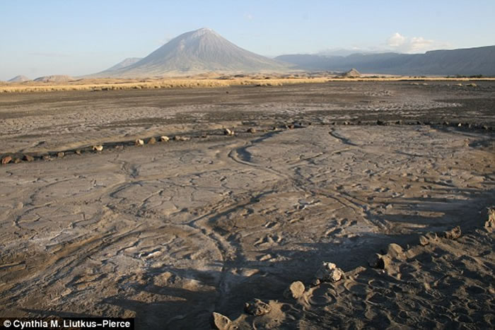 坦桑尼亚伦盖伊火山附近发现数百个古人类脚印化石