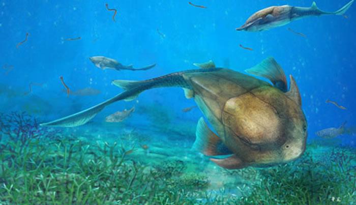 生态复原图,在4.23亿年前志留纪古海洋中畅游的麒麟鱼(杨定华绘)