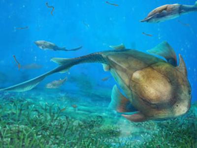中国4.23亿年前志留纪盾皮鱼——长吻麒麟鱼新发现揭秘脊椎动物颌演化之路