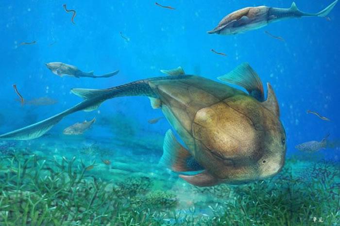 """中国""""长吻麒麟鱼""""化石揭示人类的颌骨可以追溯到4亿年前一种全颌盾皮鱼"""