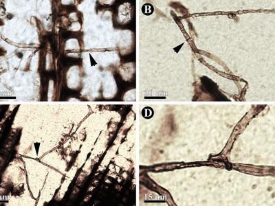 新疆二叠纪发现植物与真菌甲螨相互作用证据