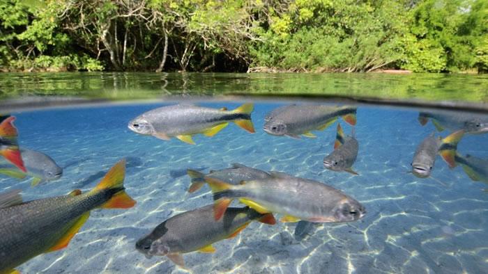 湖泊中的鱼类受影响严重。