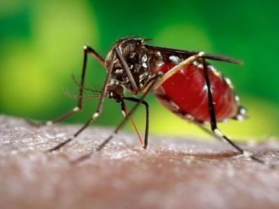美国华盛顿大学研究指寨卡病毒破坏老鼠睪丸令生育能力大减