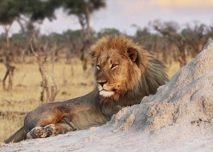 明星狮子王兄弟杰里科去世。