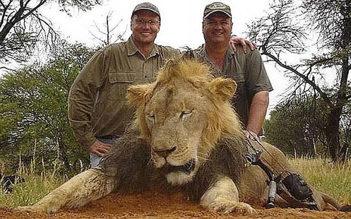 不少猎人千里迢迢猎杀狮子。