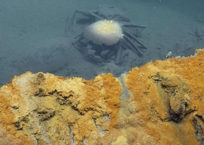 误入死亡湖的深海蟹死后成为防腐标本。