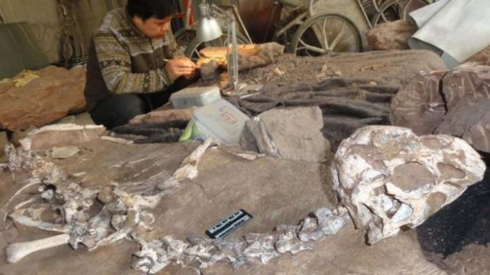 中国赣州南雄组晚白垩世第6个描述的新窃蛋龙科恐龙——泥泞通天龙