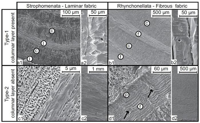 腕足动物壳扫描电镜图像