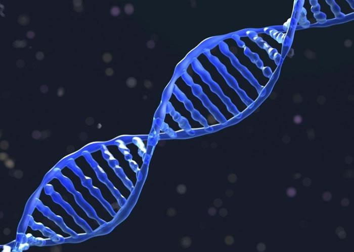 新技术成功修复老鼠脑部的基因。
