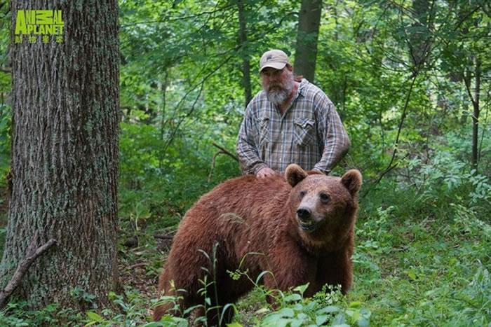 熊熊野化的程度越高,照顾它们的工作就越危险。