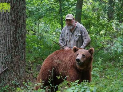 动物星球频道《再见灰熊》记录从小人工饲养的棕熊野放