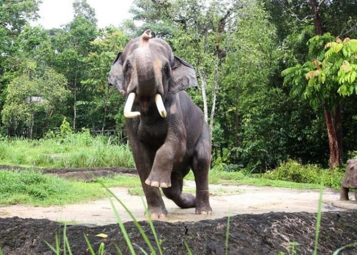 查旺成为当地夜间野生动物园的动物大使。