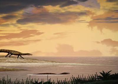 云南富源地区发现三叠纪海洋主龙类化石——梦境滨鳄