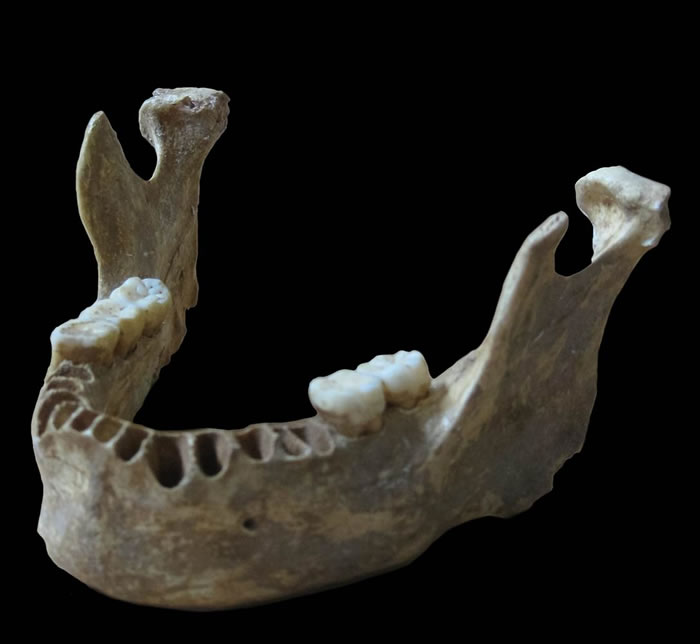 罗马尼亚洞穴中发现的4万年前的人类下颌骨