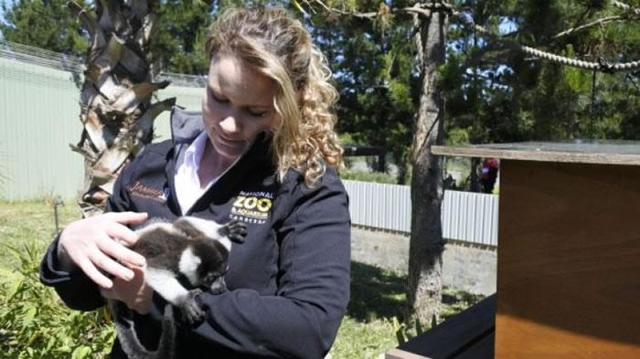 对于园中有黑白领狐猴诞生,奥斯特罗非常开心。