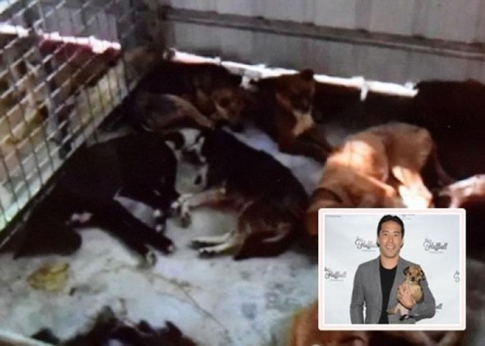 程马克(小图)送往佛寺的狗只相继病死在笼内。