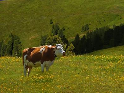人类饲养动物以获得乳制品的历史至少可以追溯到9000年前
