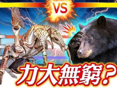 动物界力王?椰子蟹巨钳夹力比黑熊咬合力还强近两倍